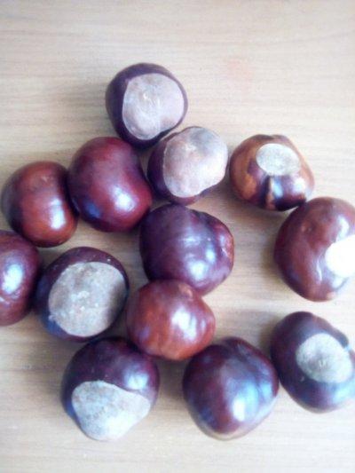 Куплю плоди каштана