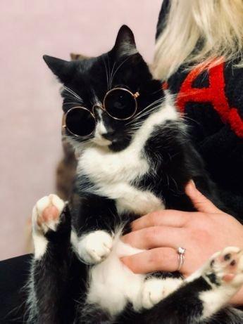 Очки для собак и котов!!!