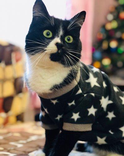 Свитер для кошек!!!