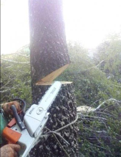 Порезка дров, спил деревьев, корчевание пней, удаление кустов. Чистка