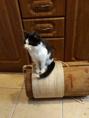 Котенку срочно нужна семья