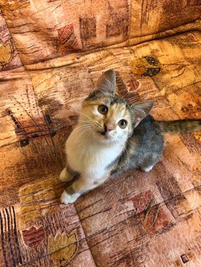 Котята + в подарок корм и лотки