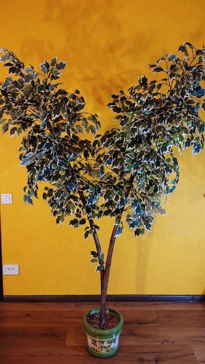 Искусственное дерево Фикус для дома и офиса