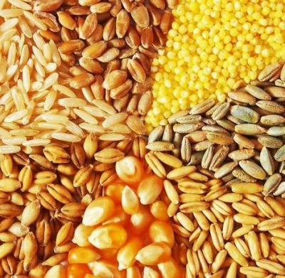 Продажа зерновых (кукуруза, пшеница, ячмень).