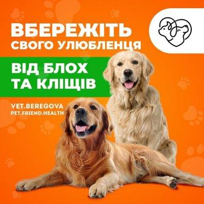 Таблетка Bravekto - вбережіть свого улюбленця від блох та кліщів.